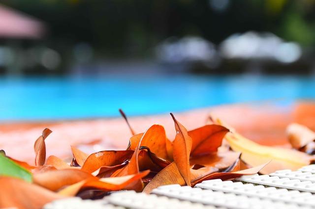suché listy u bazénu.jpg