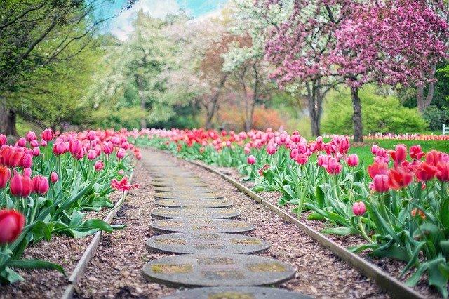 ulička mezi tulipány